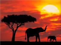 Горящий тур Кения чартерный рейс  из Киева от 595$ с авиа ,31.10,10 ночей - агентство Hottours.in.ua