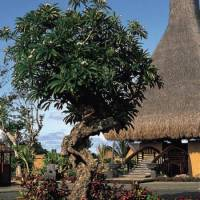 Горящие туры в отель The Oberoi Mauritius 5*, Маврикий, Маврикий