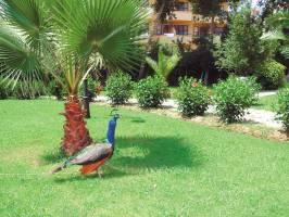 Горящие туры в отель Green Peace Hotel 3*, Аланья, Турция