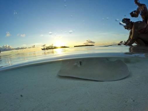 Отель Sun Island Resort & Spa 5 *,  - фото 9