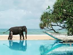Отель Горящий тур на Шри Ланку 616$ с авиа *,  - фото 1